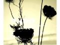 cvijece-na-bisevu-2